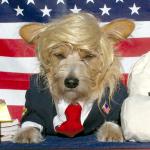 """""""Dog's bark"""" doesn't deter North Korea"""