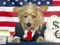 donald-trump-dog-costume-2015-1