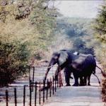 Farmers' Federation presents proposals to minimize elephant-human conflict